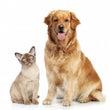 ご家族のペットの健康…