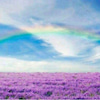 虹の架け橋セミナー 上級コースの画像