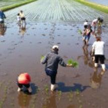 春の農業体験