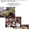 『2015 夏を楽しむ陶芸展』雄央窯 陶芸倶楽部の画像