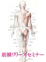 筋膜リリース各種セミナー