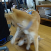 12月31日生まれの小太朗が遊びに来ました!の画像