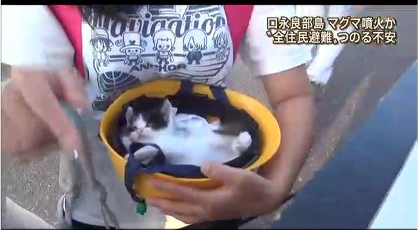 口永良部島に残された犬5匹猫26匹牛約50頭前後を救って!(福島県飯舘 ...