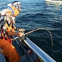 船上ランチにサメは如…
