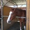 おやすみに乗馬体験しました(^_^)の画像