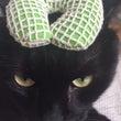 ちょんまげが似合う猫…