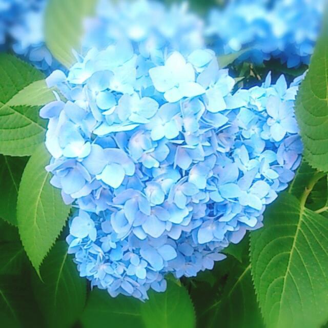 池田ちか@とっちらかった道の先~生きる歓びを心と身体からナビゲーション~@心屋・風水薬膳茶®東京・福島腹を括るの繰り返し