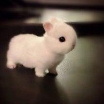 チョーかわいいウサギ…