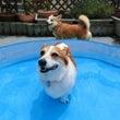 まろん家でプール開き…