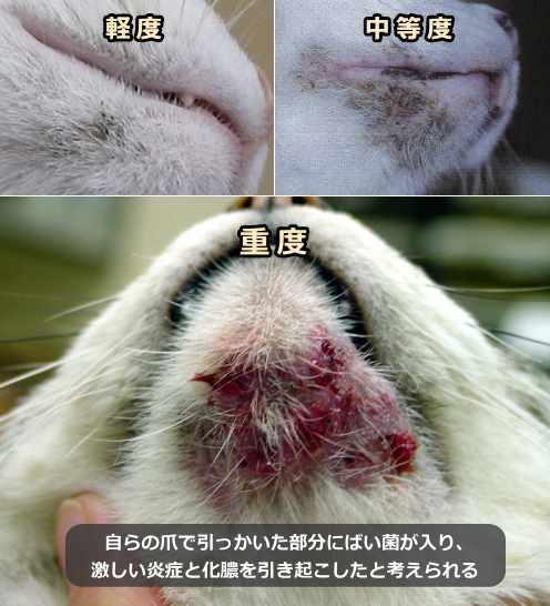 猫 顎 ニキビ 治し 方