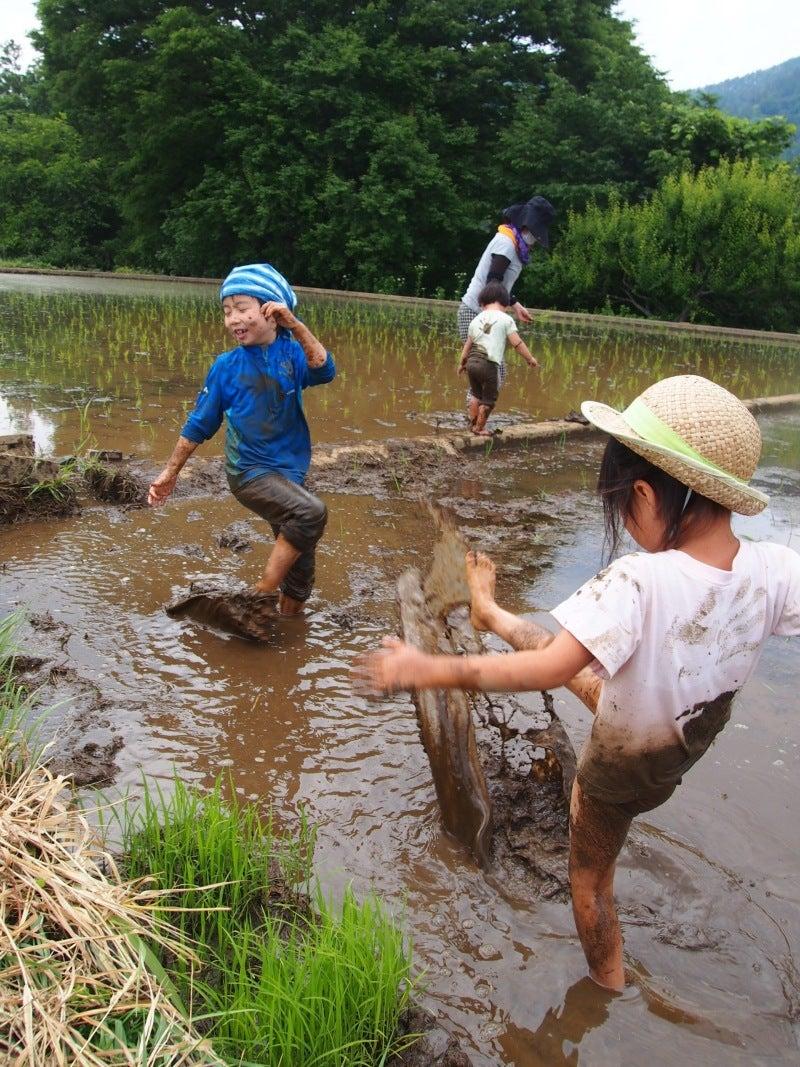 2日目 田んぼで遊ぶ子供たち