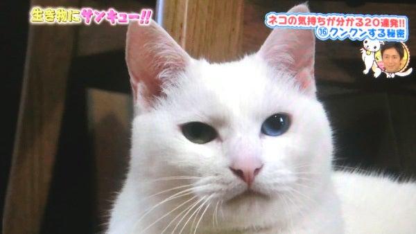 トコトン掘り下げ隊 生き物にサンキュー出演の白猫ユキ5