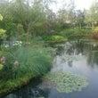 東京モネの庭