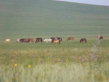 モンゴル旅行 in モンゴル観光 ホリデイ