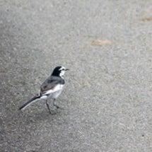 白と黒の鳥