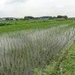 田んぼの周りの草刈り…