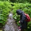 6/22夏至・セレンの森のようちえんオーダーいただきました。相乗り参加者さん募集します。の画像