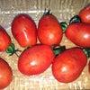 道の駅 ぶぜんおこしかけ フルーツトマト 500円の画像