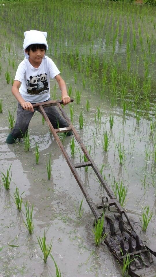 食と農にかかわる仕事にはお金にかえられない魅力がある!の記事より