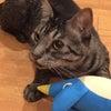 野性を取り戻した猫の画像