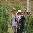 夏野菜の収穫に得意満…