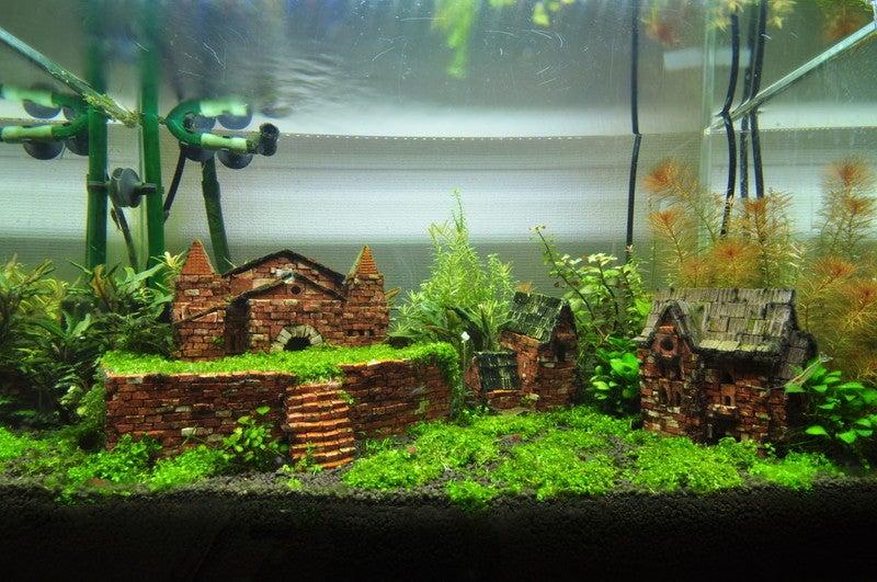 成長期 Team 熱帯魚 飼育技術部 創造美術課