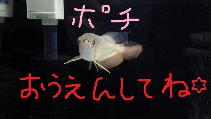 にほんブログ村 観賞魚ブログ 熱帯魚へ