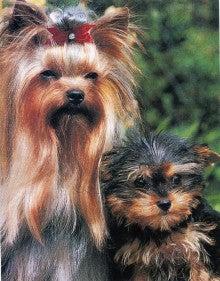 美しい犬-1   先祖を尋ねて