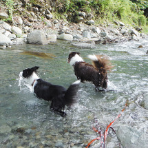 今年初めての川遊び