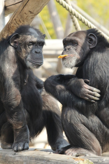 類人猿分類 とくダネ ガイアの夜明け
