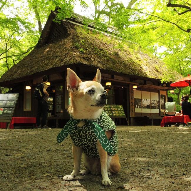 ふうこ奈良公園で