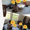 ボストン日本人マタニティサポートグループ 母乳&アロマ分科会+ミーティング♪の画像