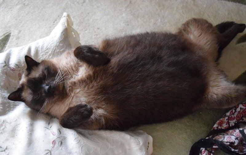 寝転ぶジージ