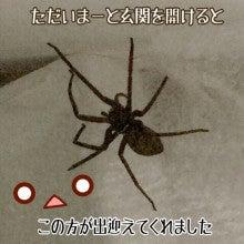 蜘蛛 大きい