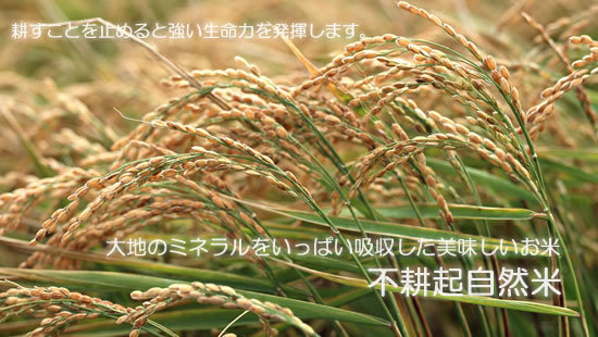 不耕起農法の画像