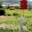 島根県・鳥取県へ夏休…