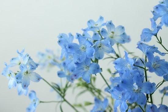 爽やかなブルーのデルフィニウム500円 +αするなら?|500円で!花の ...