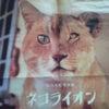 ネコライオンの画像