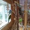 今日の出勤鳥さんは。の画像