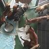 【拡散希望】小型犬 大量収容の画像