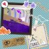 金魚…の画像