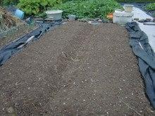 150728たまねぎ苗床土作りと太陽熱消毒処理22