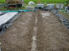 150728たまねぎ苗床土作りと太陽熱消毒処理23