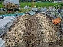 150728たまねぎ苗床土作りと太陽熱消毒処理17