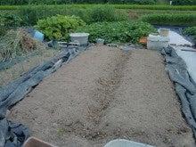 150728たまねぎ苗床土作りと太陽熱消毒処理21