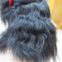 剛毛、多毛の縮毛矯正…