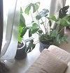整体サポート記事用植物
