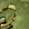 夜釣りの画像