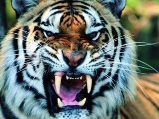 虎穴 に いら ずん ば 虎 児 を 得 ず 意味