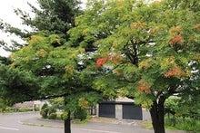 紅葉が始まった木